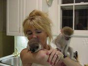 GJ458 adorable little Wonderful Pygmy Marmoset and Capuchin 0703195769