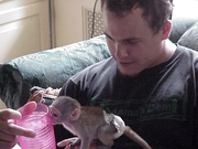 DHS2 males and females Capuchin pygmy marmoset available 07031964582